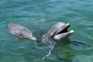Diputados aprueban iniciativa que prohíbe delfinarios en el país