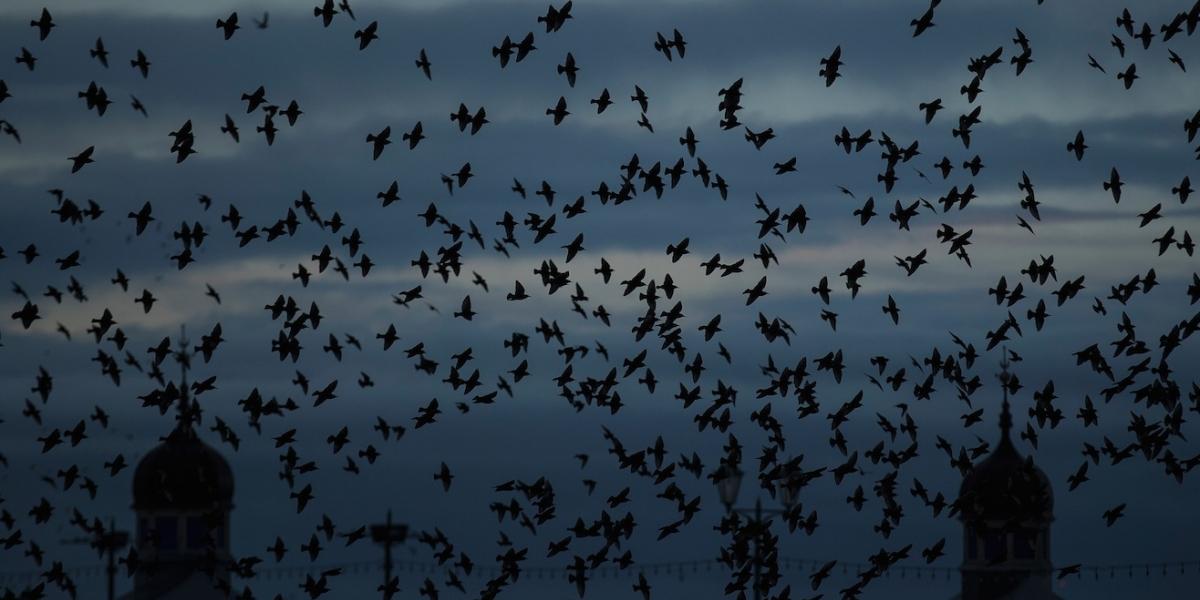 Crean videojuego para proteger aves en peligro de extinción