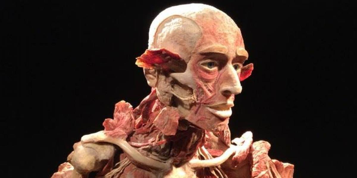 Resultado de imagen para imagenes Body Worlds Vital por primera vez en Montevideo
