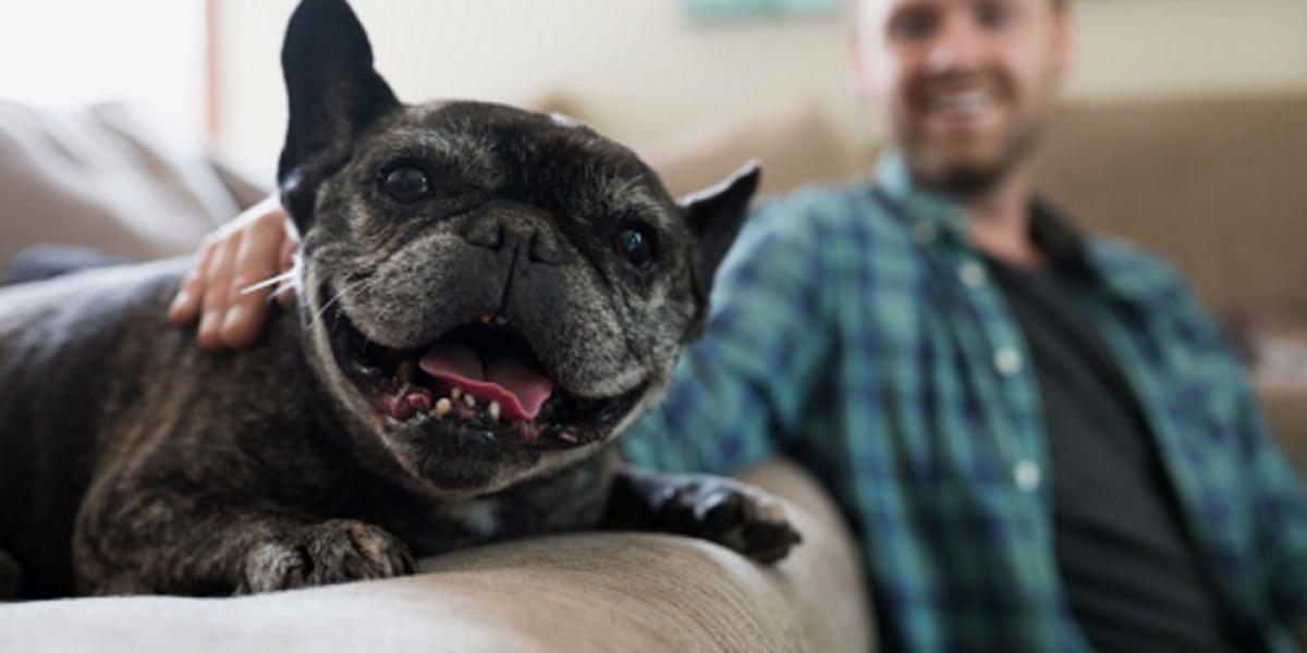 Por estas razones no debes cortar la cola y las orejas de tu perro