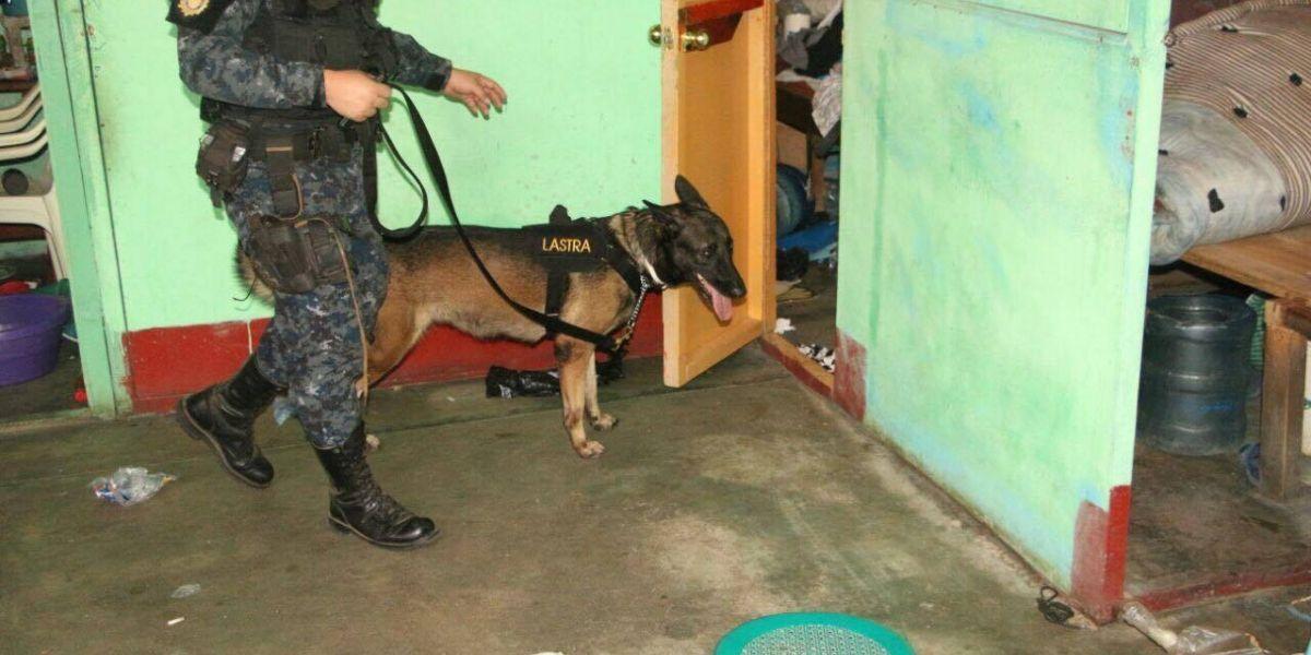 """""""Lastra"""", la K-9 que incautó droga en la cárcel de Izabal"""