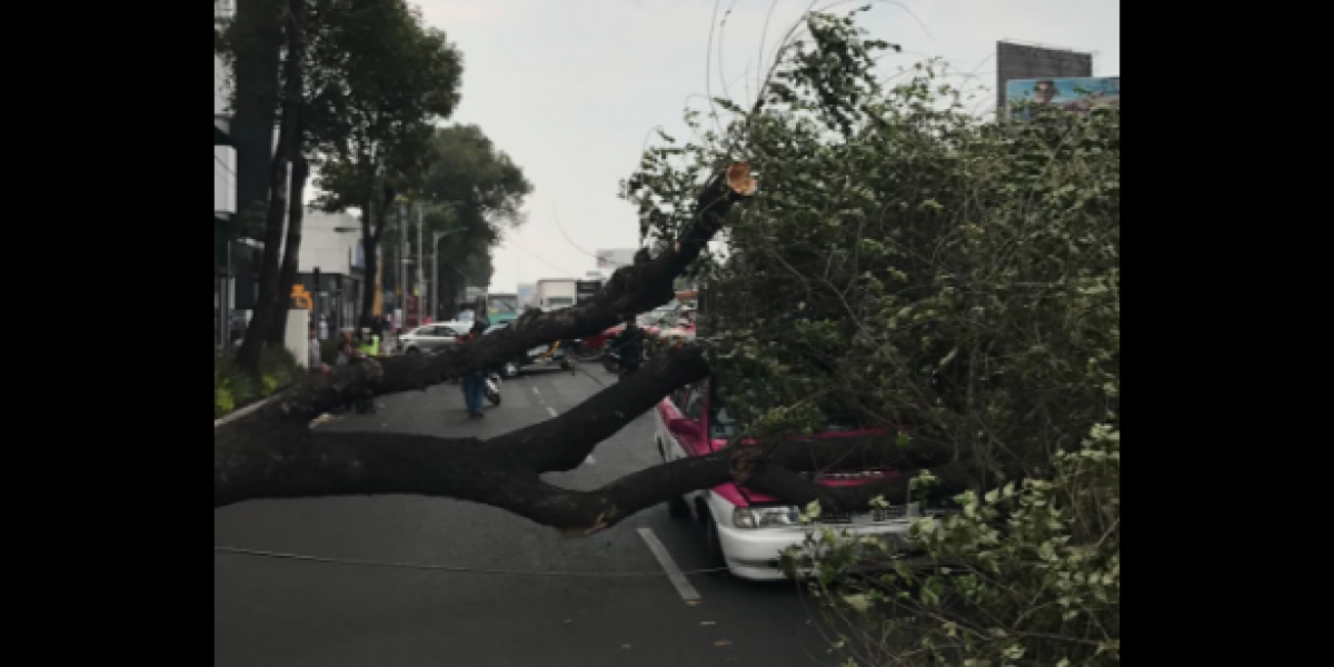 Bomberos reportan al menos 67 árboles caídos en la CDMX