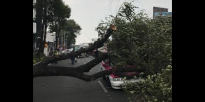 Decenas de árboles caídos por fuertes vientos en la CDMX