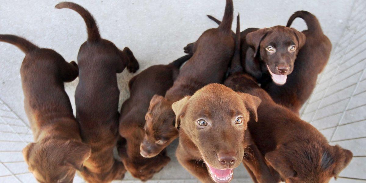 Confirmado: cães conseguem saber se você é uma pessoa ruim