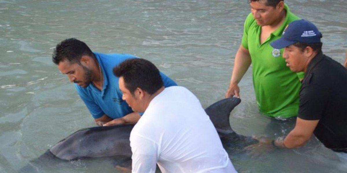 Vacacionistas y autoridades rescatan a delfín varado en Isla Mujeres