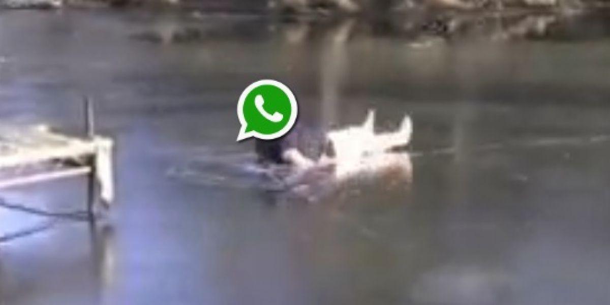 Mientras WhatsApp vuelve, las redes se inundan con memes