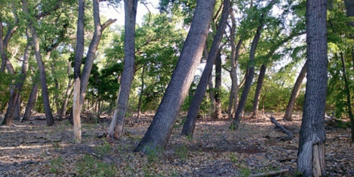 Hallan a hombre crucificado en un árbol en Nuevo México