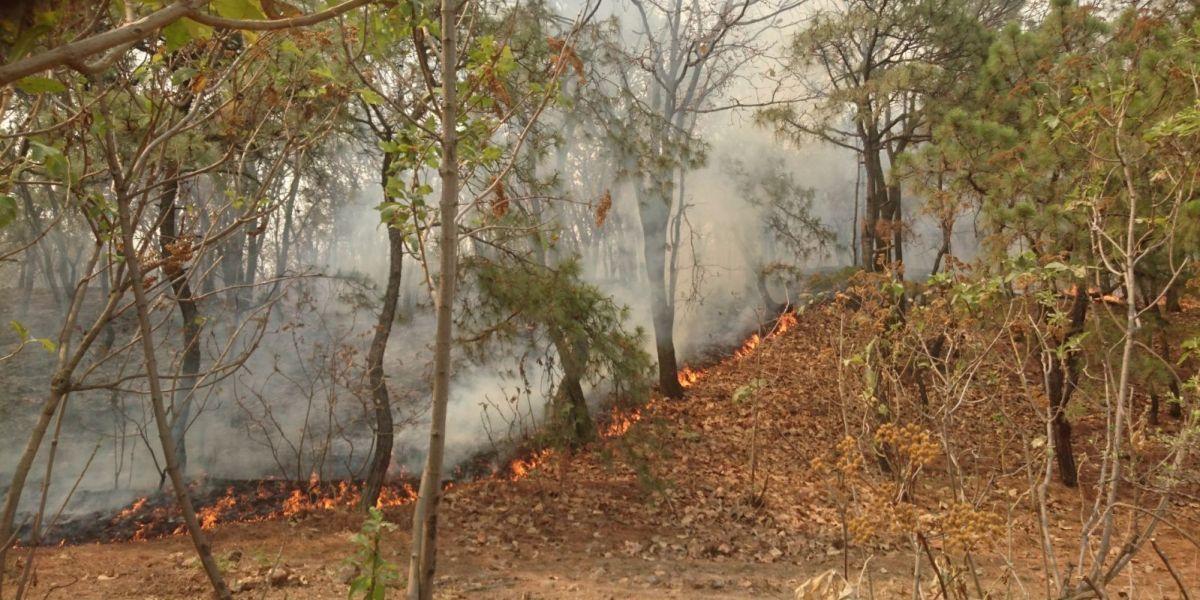 Autoridades de Jalisco controlan incendio en bosque de La Primavera