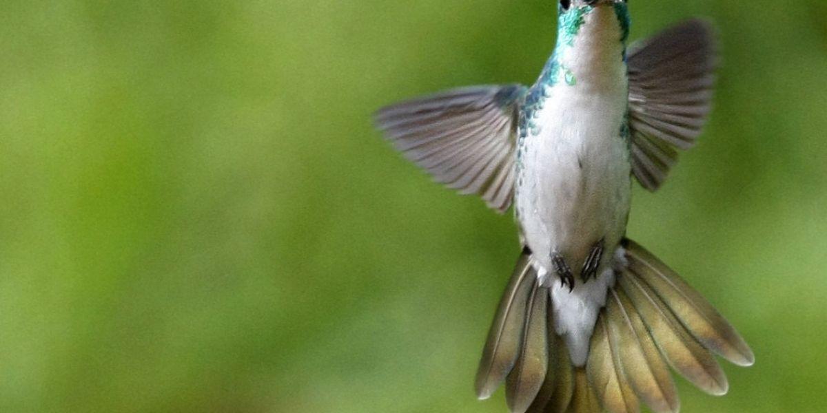 Identifican cuatro sitios para el avistamiento de aves exóticas en el Atlántico