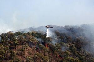 Incendio en el Bosque de la Primavera.