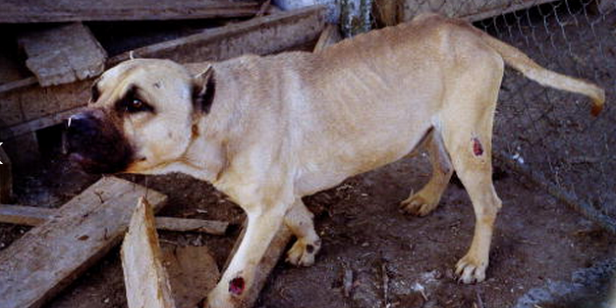 Tres pitbull mataron a un ladrón en el sur de Bogotá