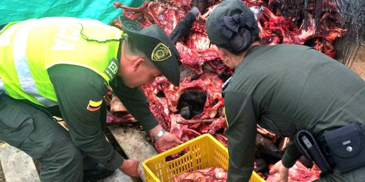 ¡Indignante! Sacrificaban caballos para comercializar la carne en Rionegro