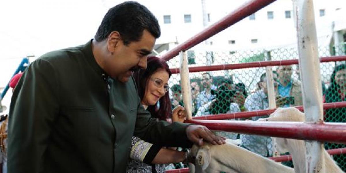 Maduro pide a unas vacas su apoyo a la Constituyente y levanta la polémica