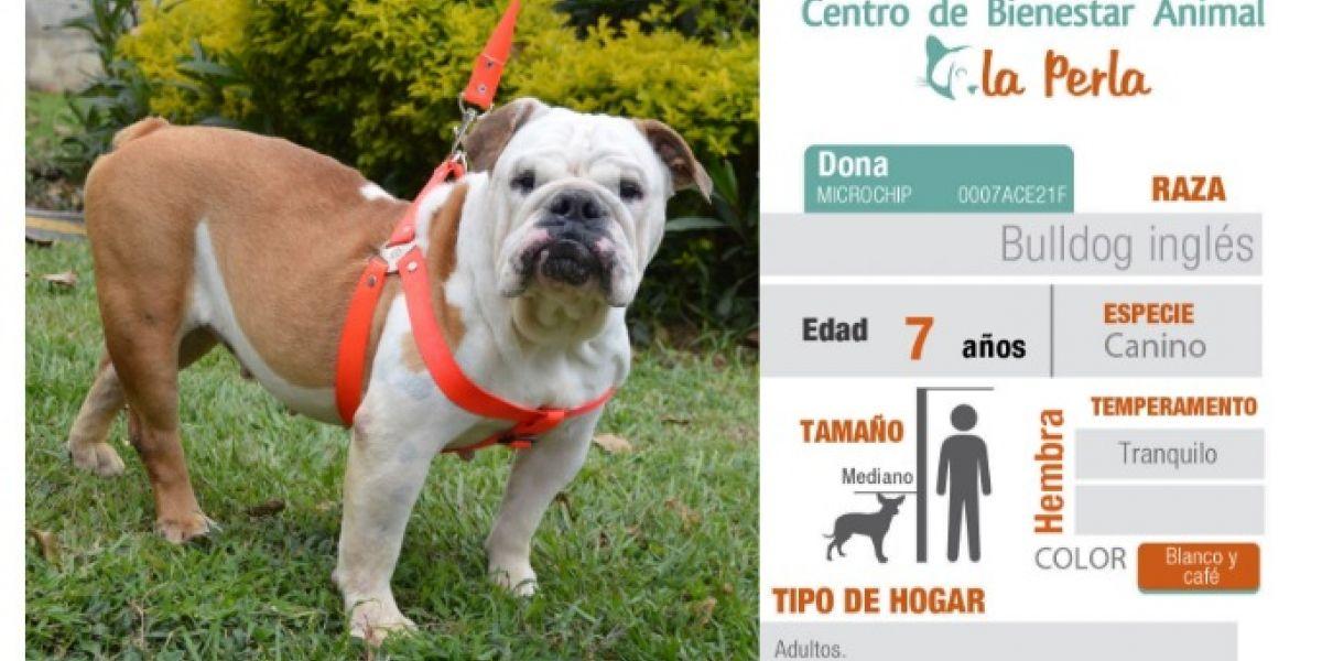 Si desea adoptar un perro o un gato esta semana lo puede hacer en Medellín