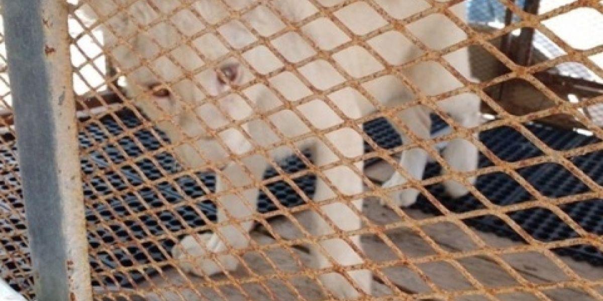 Encuentran león de tres meses en domicilio de Monterrey