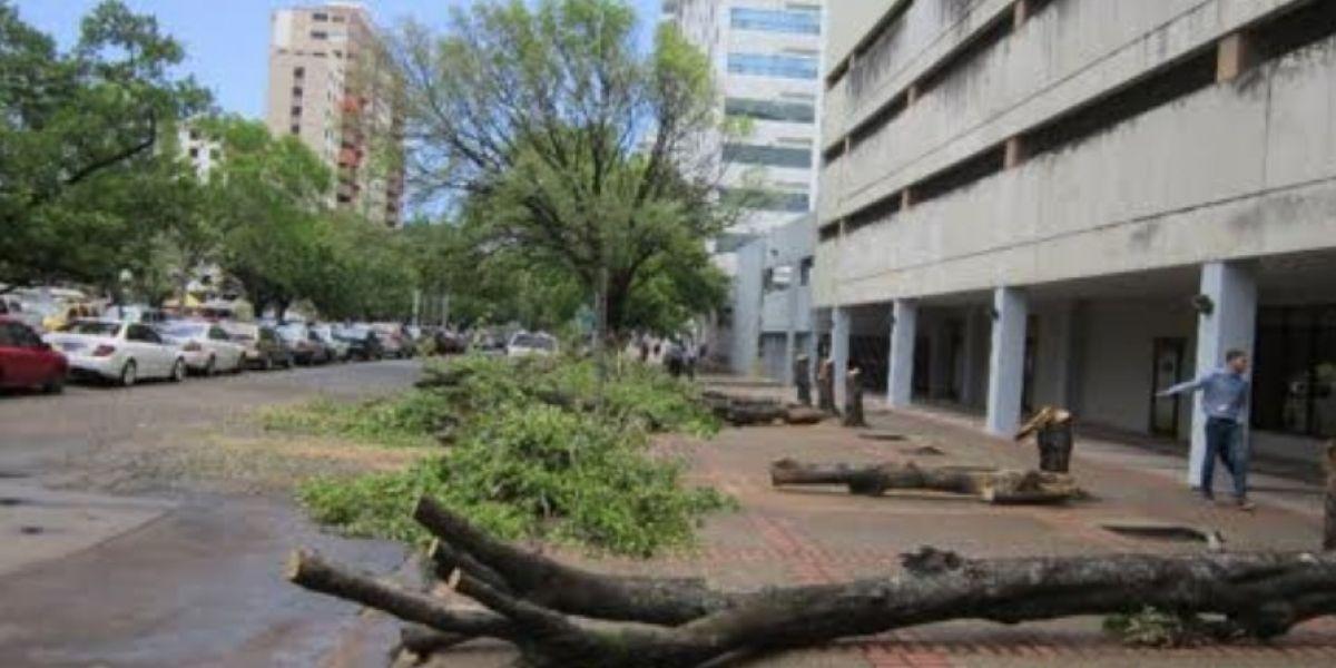 Municipio de San Juan multa funcionario de ACAA por poda de árboles