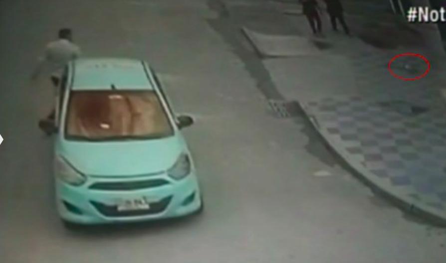 Así fue como un taxista se robó un perro en el sur de Bogotá