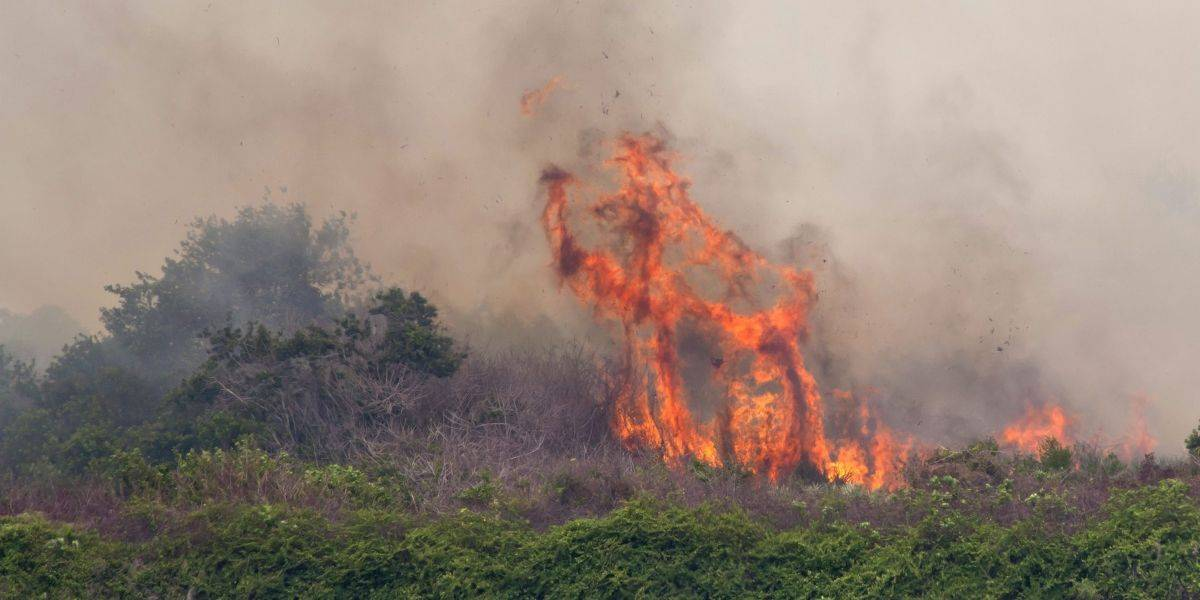 Más de 125 incendios forestales continúan activos en Florida