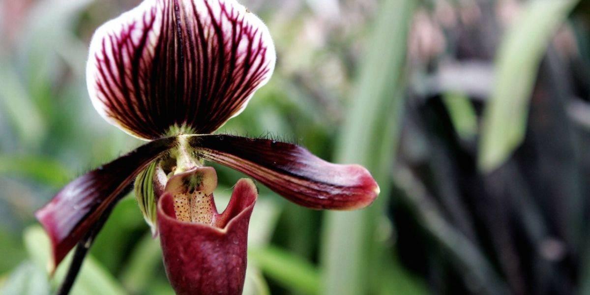 Científicos de todo el mundo evaluarán en Medellín estado de la biodiversidad