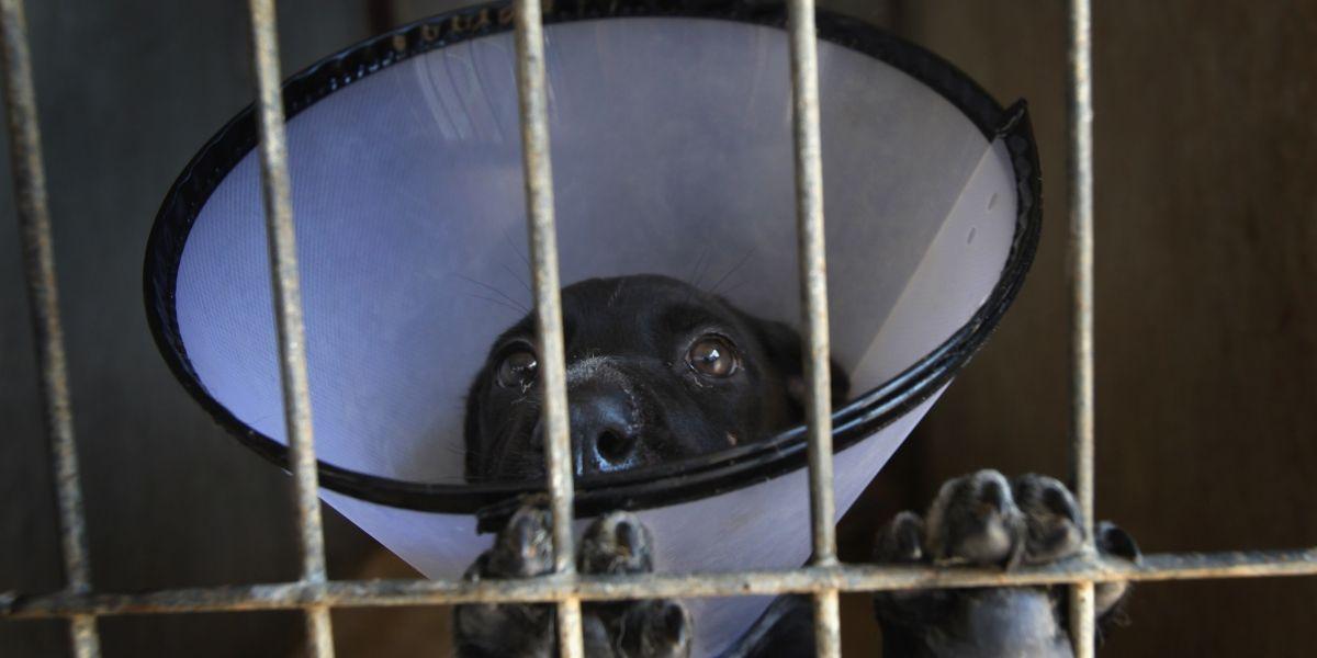¡Ojo con los falsos veterinarios! Su mascota estaría en riesgo