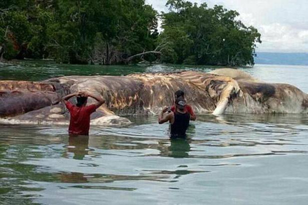 Qué era la misteriosa criatura gigante aparecida en una playa