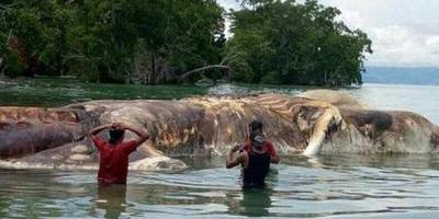 Una gigantesca criatura marina fue hallada en una remota playa de Indonesia
