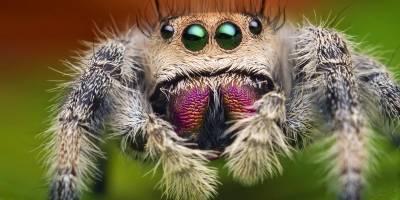 Encuentran araña gigante inmune a los insecticidas — Alerta