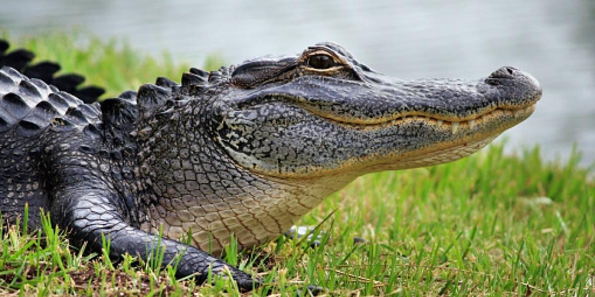 Un pastor fue devorado por cocodrilos en África