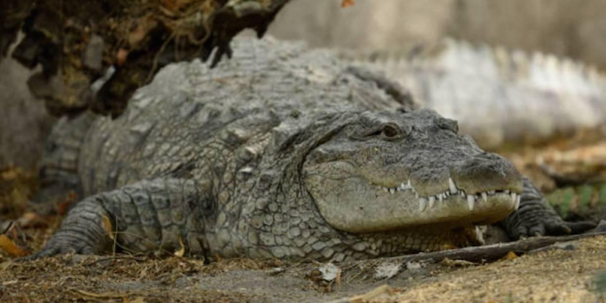 """Pastor es devorado por cocodrilos al querer """"caminar sobre el agua"""""""