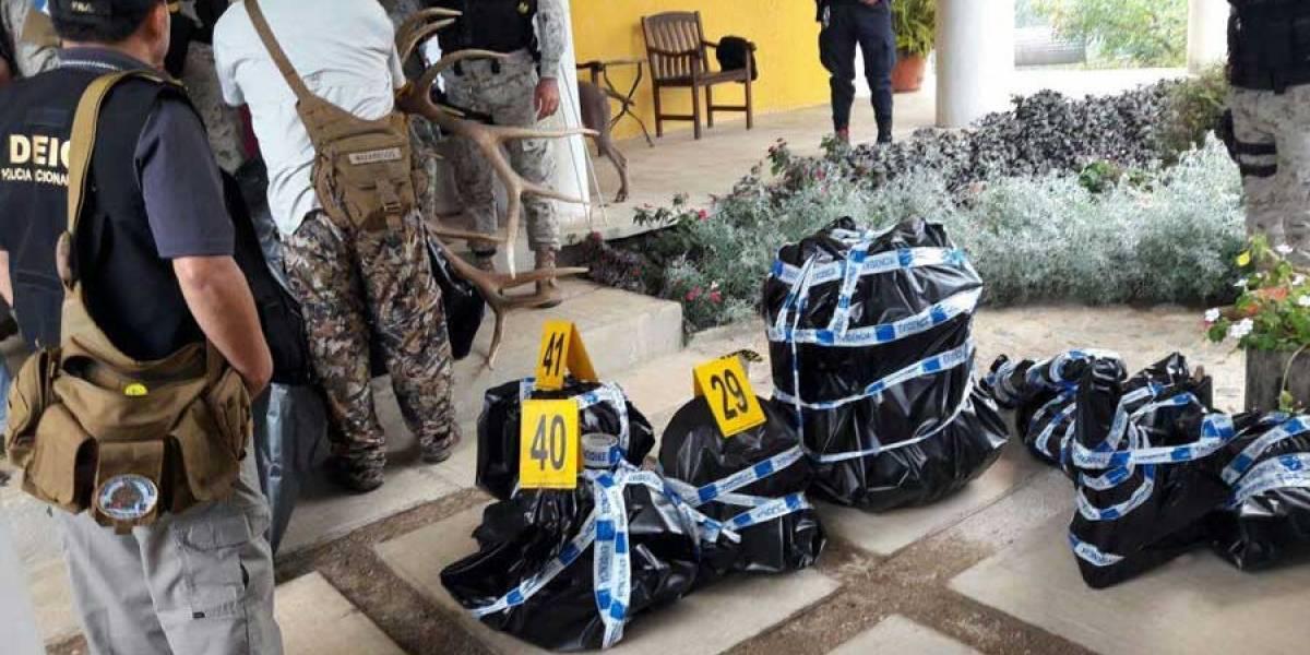 PNC decomisa 21 pares de cornamentas de venado en Sumpango