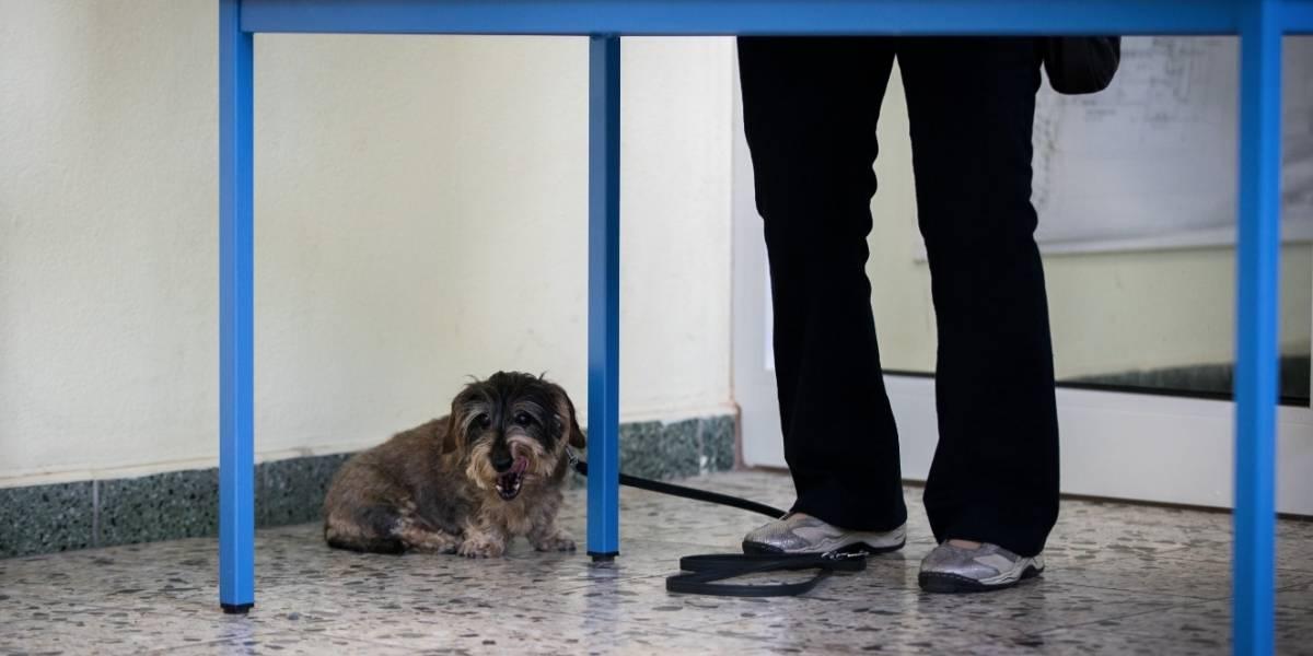 Policía inició rescate de Sasha, la perra maltratada al norte de Bogotá