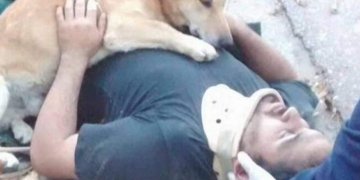 Conmovedor momento en el que un perro abrazó a su dueño herido hasta que llegó la ambulancia
