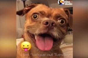 Este perrito es furor por imitar los emoticones de WhatsApp