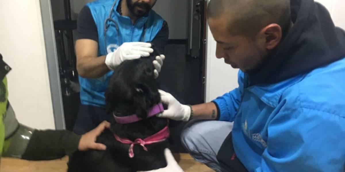 VIDEO. Así fue como la Policía rescató a Sasha la perrita maltratada en Bogotá