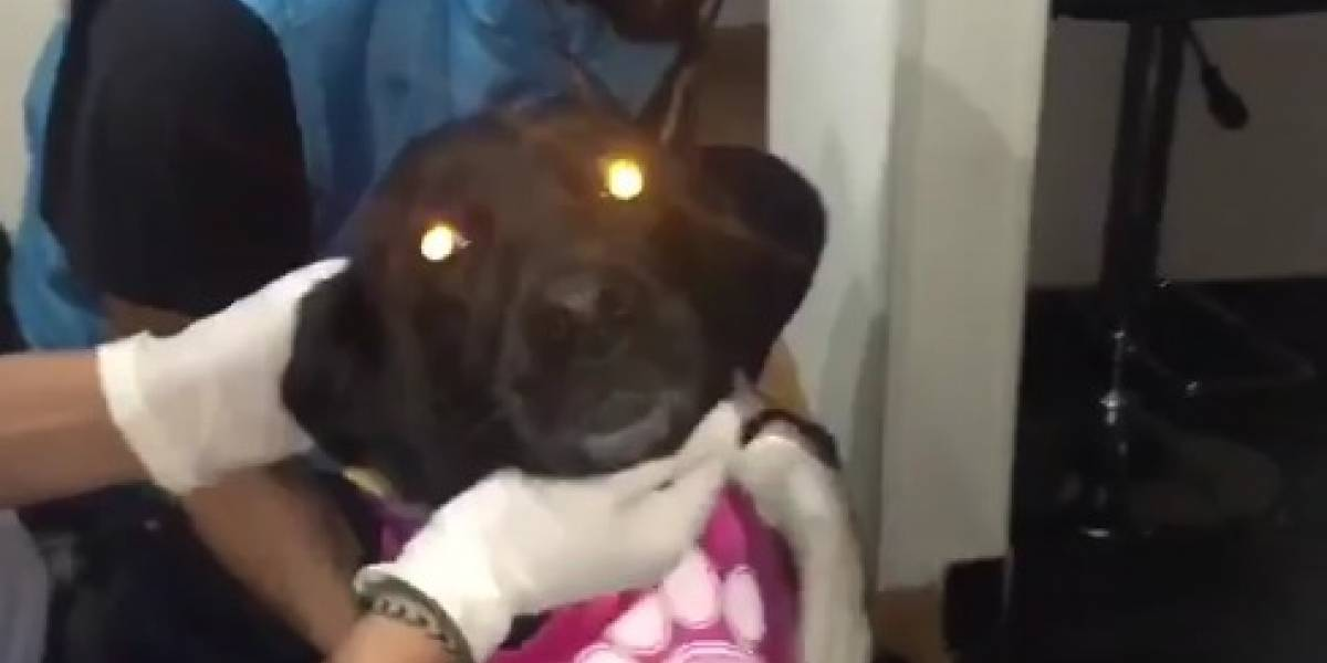 Video: Así fue como la Policía rescató a Sasha la perrita maltratada en Bogotá