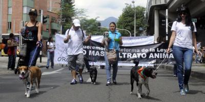 Los 5 casos de maltrato animal que han estremecido a Bogotá