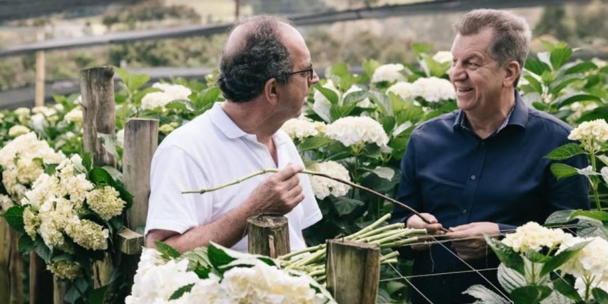 Los tallos de las hortensias le salvan la vida a los árboles en Antioquia