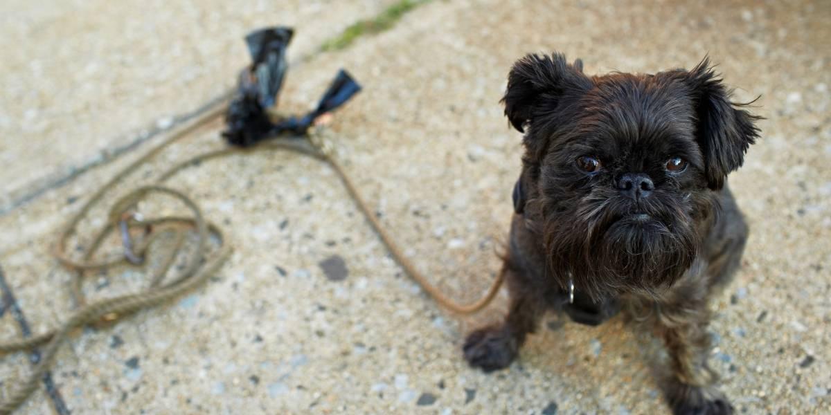 60% das queixas de maus-tratos contra animais são falsas, diz pesquisa