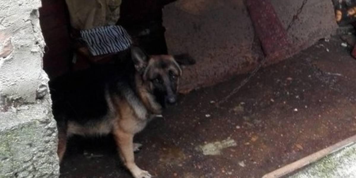 Nuevo caso de maltrato a un perro en el norte de Bogotá
