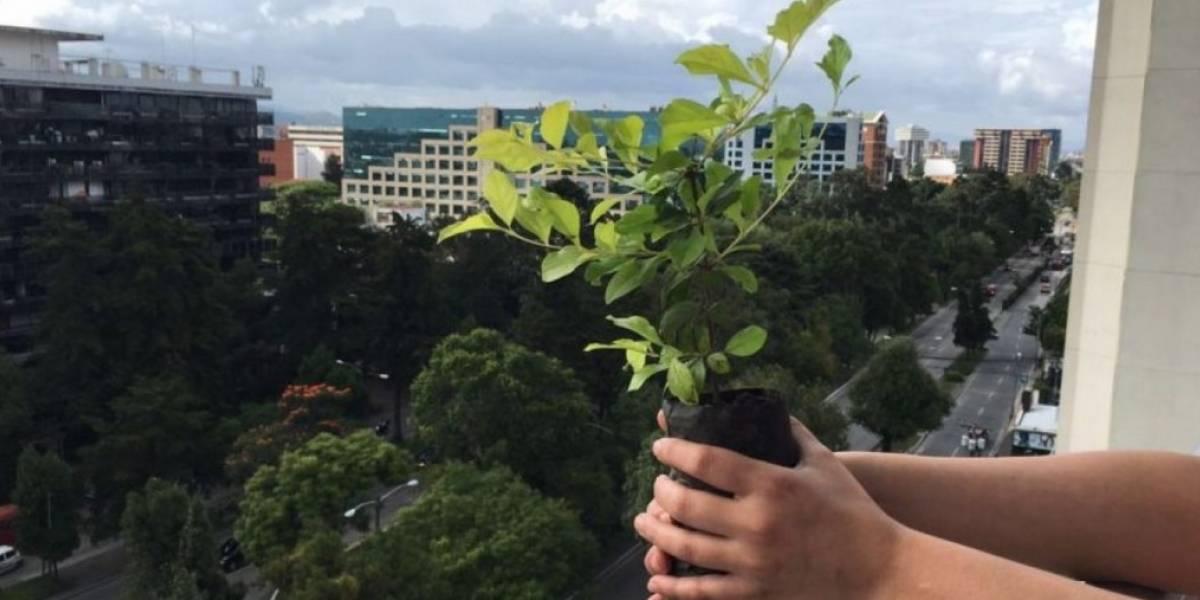 INDE contribuye al medioambiente con una donación de 2.5 millones de árboles