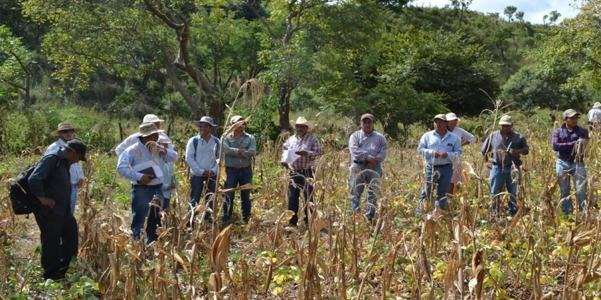 Sugieren destinar más fondos para realizar investigaciones agrícolas