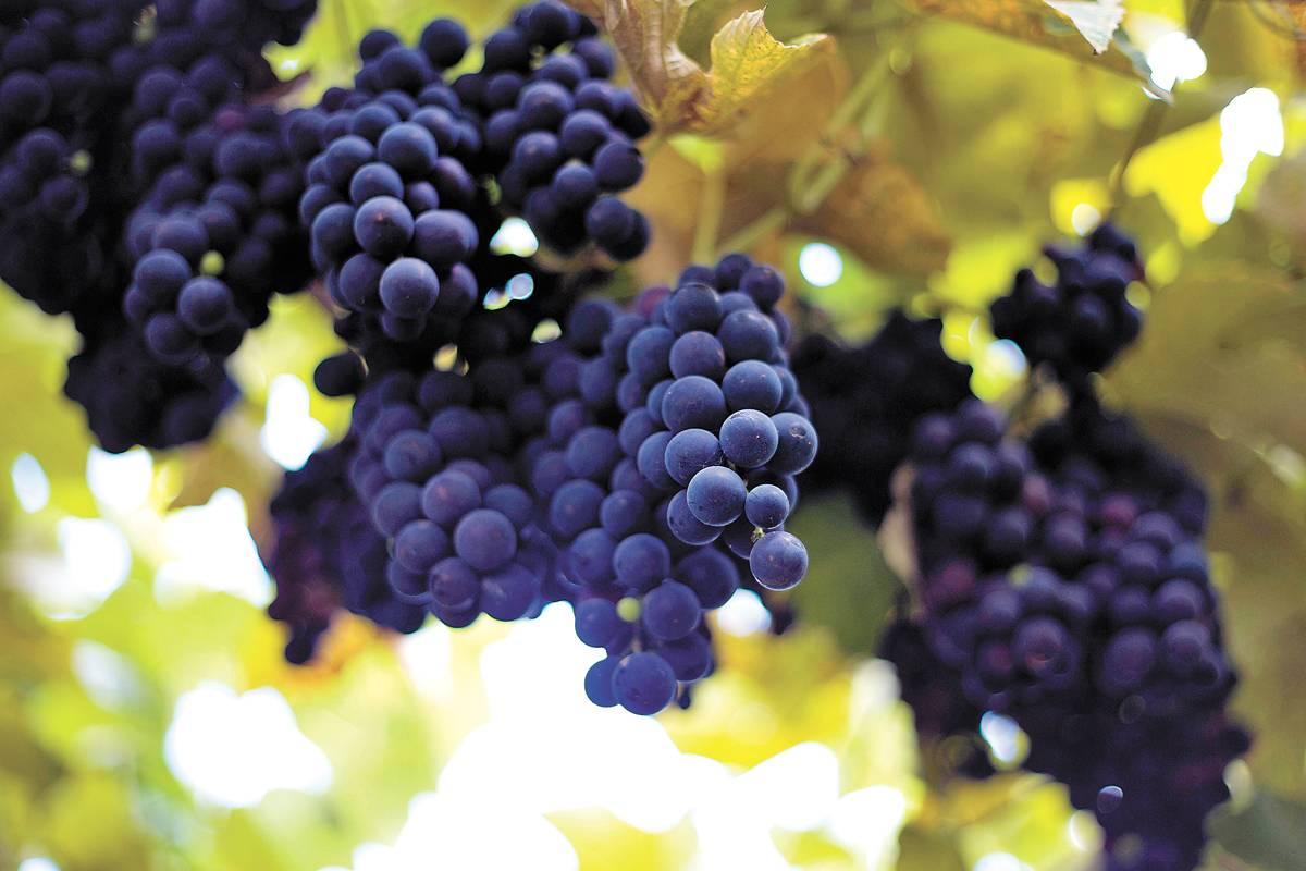 Visitar uma vinícola é experiência única | Bruna Prado e Anassilvia Bortoluzzi