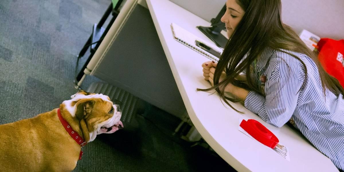 Por esta razón sería bueno admitir mascotas en la oficina
