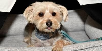 Video de perro usado para limpiar carro indigna las redes sociales