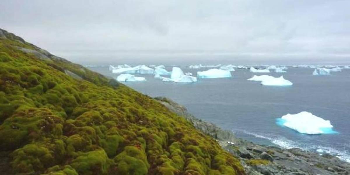 La Antártida amenazada: cambia el blanco por el verde