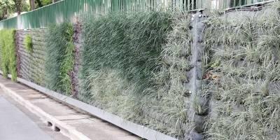 Plantas em muros, paredes e telhados amenizam o calor e deixam a paisagem urbana mais bonita