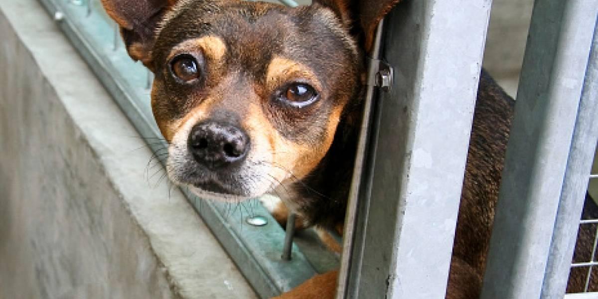 En Quito y Guayaquil hay 125.000 canes sin casa