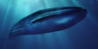 """Preocupación por nuevos casos de """"la ballena azul"""" el peligroso juego viral que incita al suicidio"""