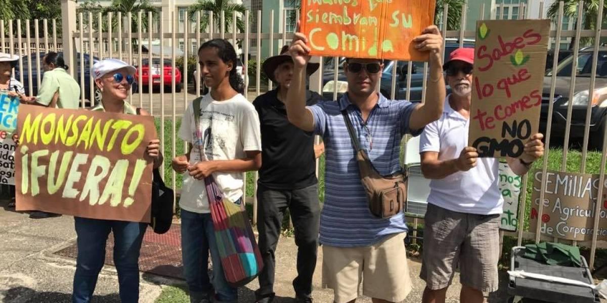 Colectivo realiza marcha contra Monsanto