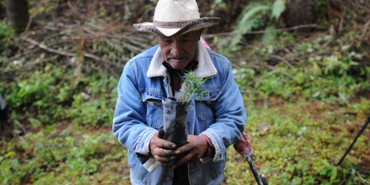 Profepa pide a gobierno de Michoacán mayores acciones en materia forestal